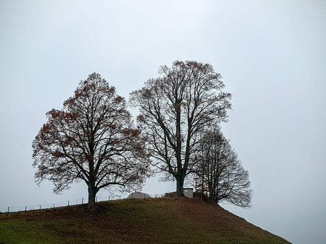 Kahle Laubbäume auf einem Hügel, darüber grauer Nebel