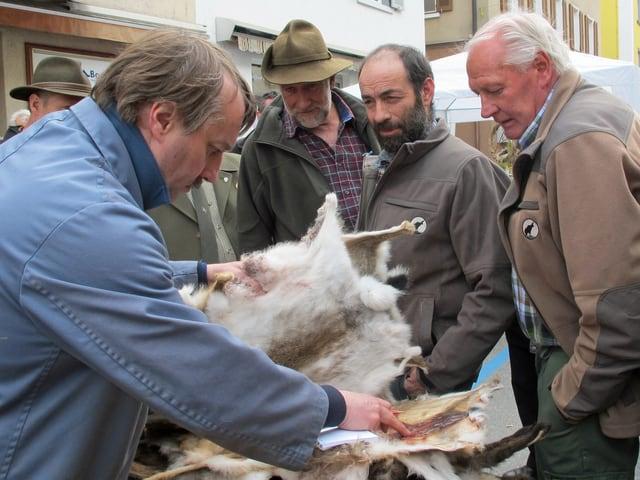 Fellhändler beurteilt Felle, Jäger schauen zu.