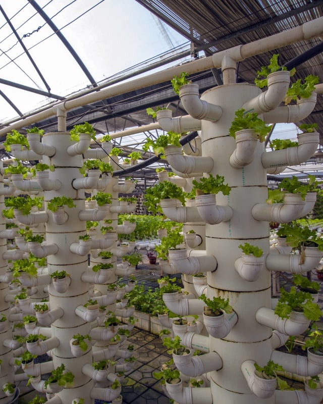 Dicke Röhren mit zahlreichen Seitenrohren, aus denen Pflanzen wachsen.