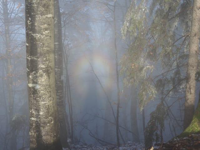 Eine gespenstische Gestalt im Wald.