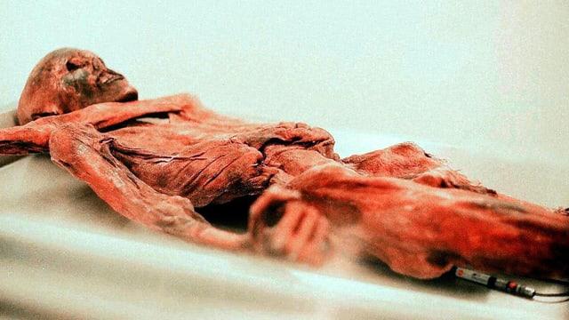 Eine mumifizierte Leiche, berühmt geworden als Ötzi.