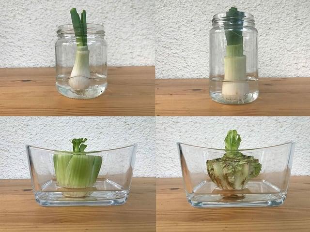 Vier Gemüse in Glasschalen.