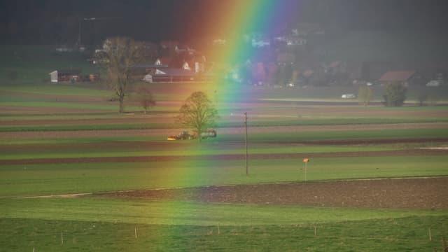 Kein Schnee im Limpachtal, dafür ein wunderschöner Regenbogen.