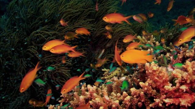Fische im Korallenriff.
