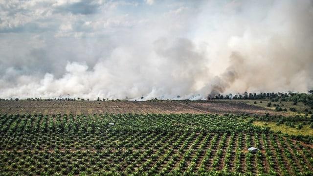 Rauch durch Rodungen über den Palmölfeldern in der indonesischen Provinz Riau.
