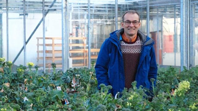 Ein Mann mittleren Alters steht mit blauer Jack immitten von Broccoli-Pflanzen in einem Treibhaus.
