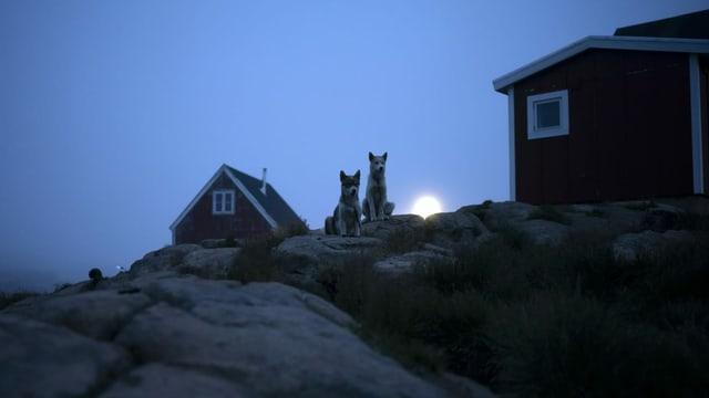 Häuschen mit Hunden davor in Grönland