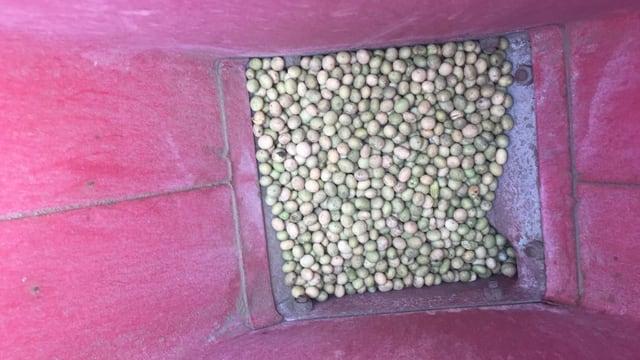 Weisse Bohnen in pinkem Behälter