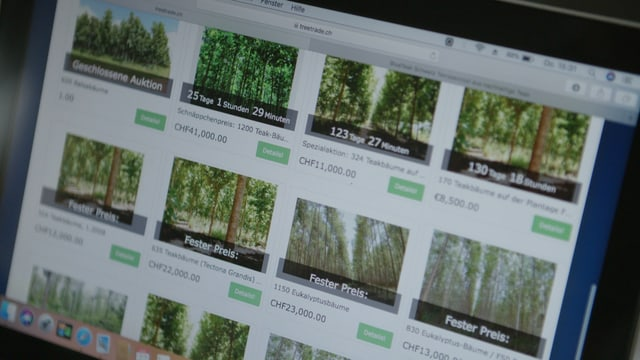 Auktionsplattform: Anleger versuchen Bäume abzustossen