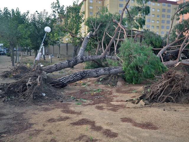 Ein Tornado hat einen Baum in der Stadt entwurzelt.