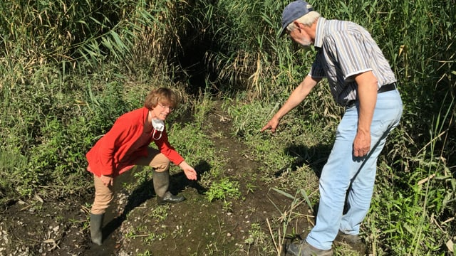 Elisabeth Klocke und Gerwin Obst sorgen sich um den Lebensraum des Schierlings-Wasserfenchels.