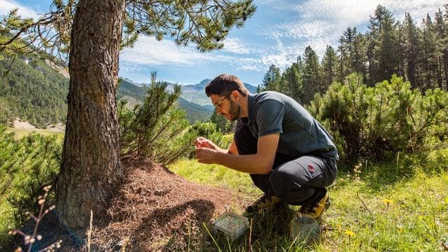 Der Experte untersucht einen Ameisenhaufen.