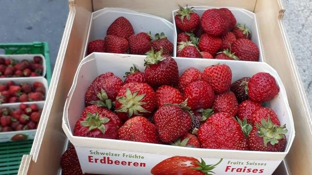 Erdbeeren in einer Kiste auf einem Fahrrad.