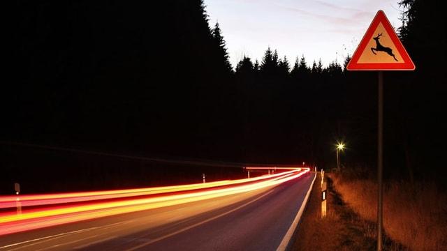 Verkehrsschild Achtung Wildwechsel