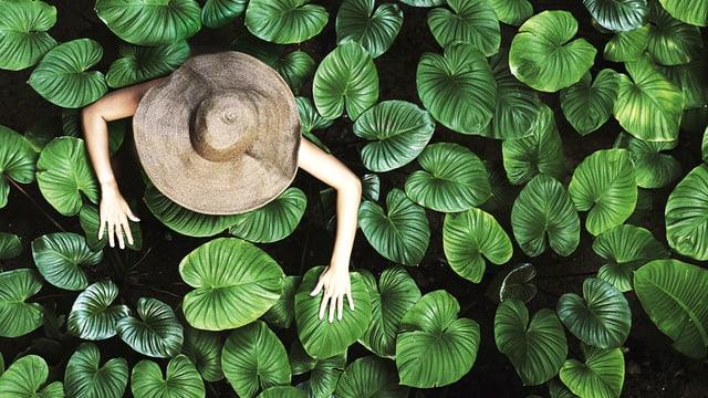 Aus der Vogelperspektive: Frau mit breitem Hut zwischen Blättern.