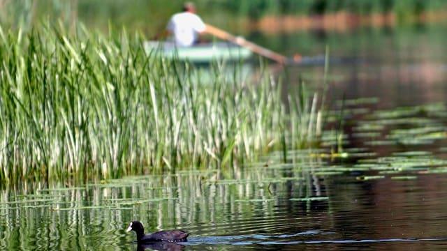 Im Sommer ist die Wasserqualität im Moossee schlecht.