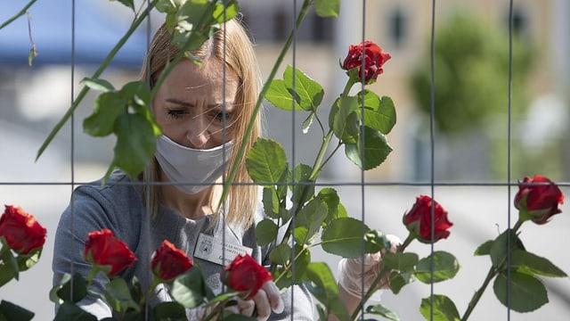 Katarzyna Goral hängt zum Gedenken 75 roten Rosen in einen Grenzzaun an der Altstadtbrücke an der polnischen Grenze in Zgorzelec.