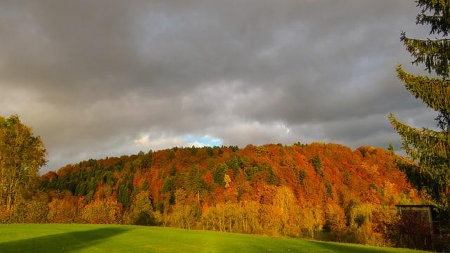 Herbstlicher Wald in der Abendsonne.
