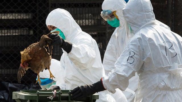 Mitarbeiter der chinesischen Behörden beseitigen in Schutzanzügen getötete Hühner auf einem Markt in Hongkong.