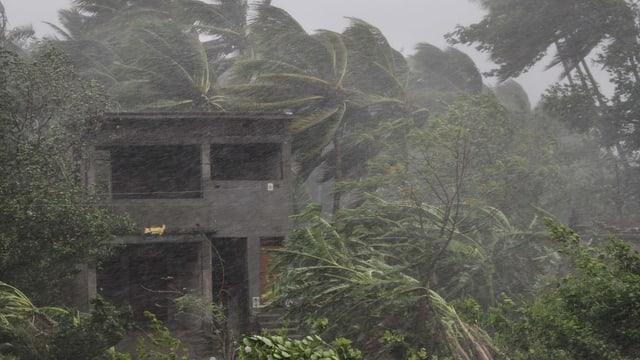 chasa bandunada e plantas en la plievgia