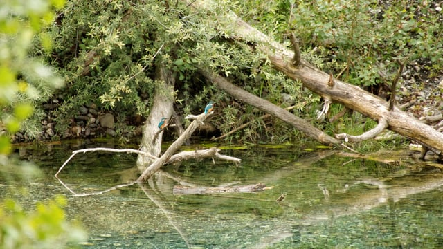 Fotografia dals biotops sin l'areal.