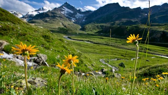 Eine Landschaft im Kanton Graubünden.