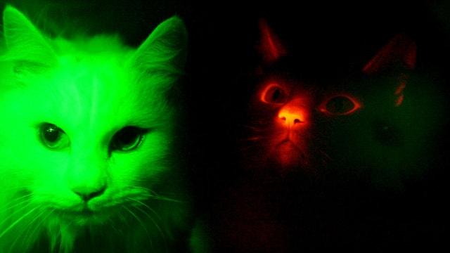 Grüne und rote Katze