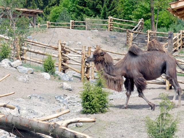 Mongolische Steppe im Zürcher Zoo