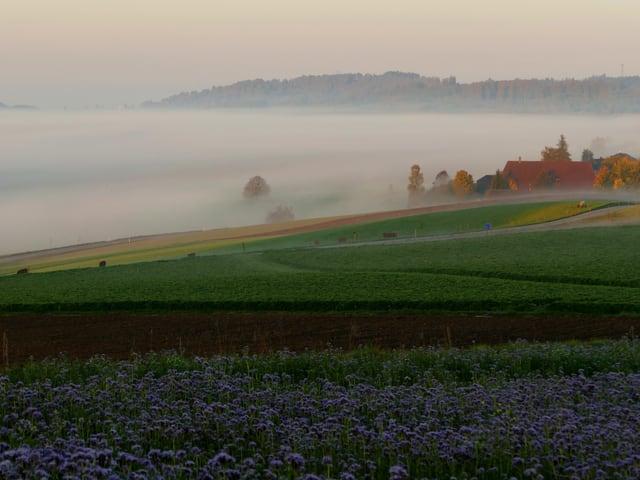 Landschaft im Morgenlicht mit Nebel