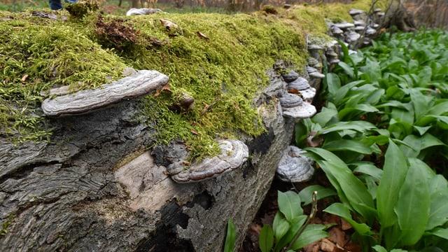 Junges Grün neben totem Holz.