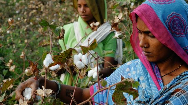 Baumwollpflückerinnen in Tansania.