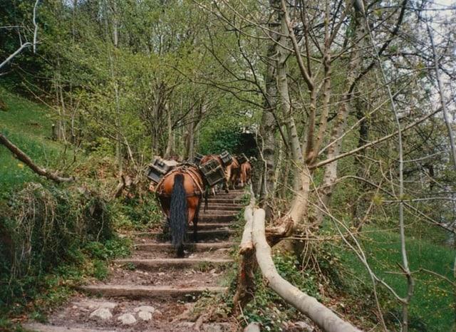 Pferde auf der Treppe bei Bauen