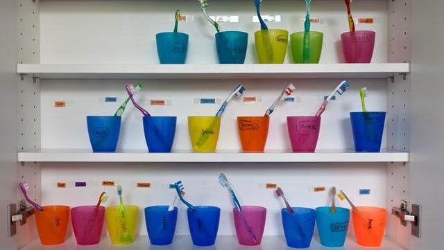 Zwanzig bunte Zahnputzgläser mit Kinderzahnbürtsen in einem Badezimmerschrank