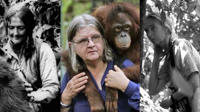 Die «Trimates»: Dian Fossey, Birute Galdikas und Jane Goodall