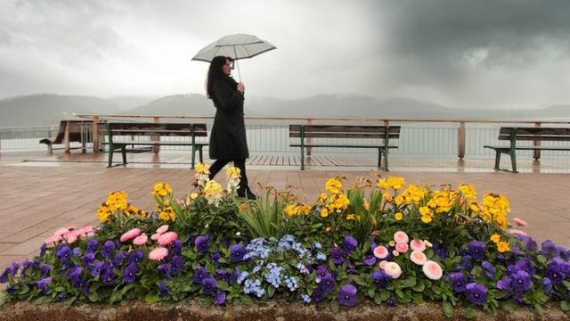Eine Frau geht am See entlang eines Blumenbeetes spazieren, bei schlechtem Wetter.