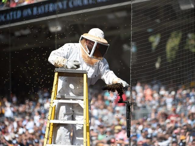 Der Kammerjäger nähert sich auf einer Leiter dem Bienenschwarm.