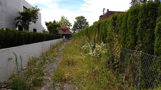 Ein überwachsener Weg zwischen Betonmauer und Zaun.