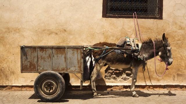 Ein Esel zieht einen Karren
