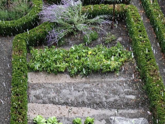 Regentropfen in einem Gartenbeet