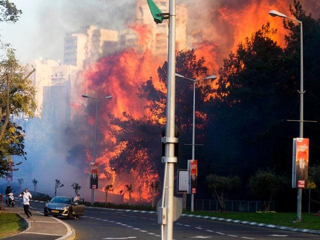Brennende Bäume