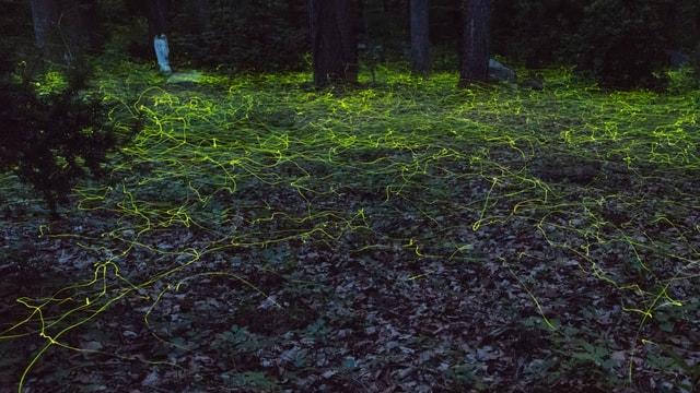 Nachtaufnahme von umherschwirrenden Glühwürmchen.