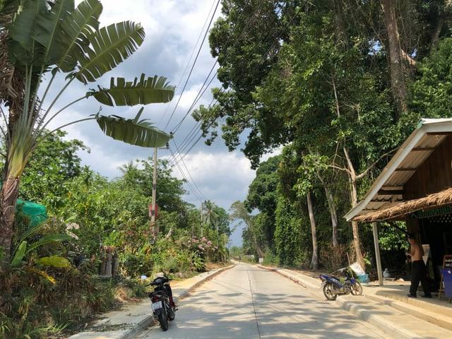 Strasse umgeben von Wald