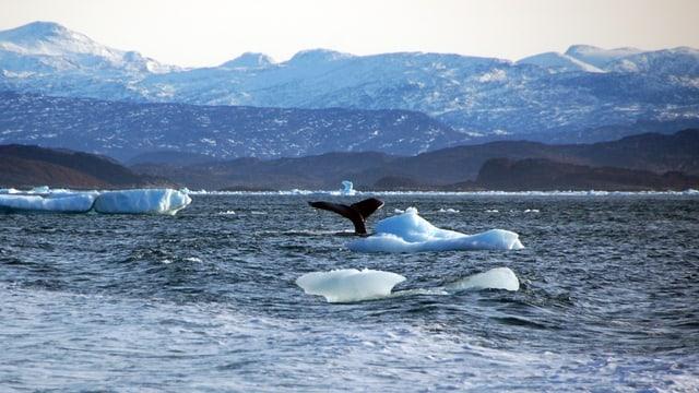 L'Ocean Arctic.