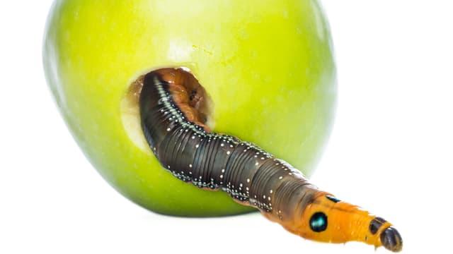 Ein Wurm im grünen Haus: Mit ihren Regierungsmitgliedern tut sich die Partei oft schwer.