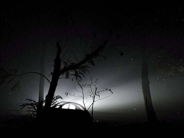 Verkohlter Wald bei Nacht. Im Gegenlicht einer Lampe ist ein Autowrack zu sehen.