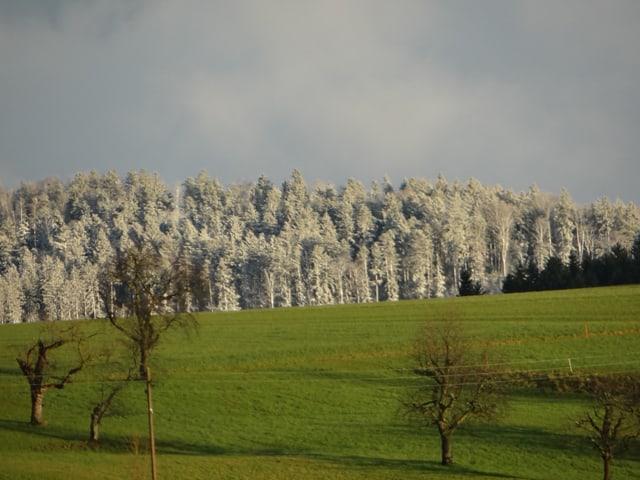 Weisse Bäume, grüne Wiese.