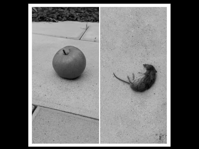 Apfel und Maus