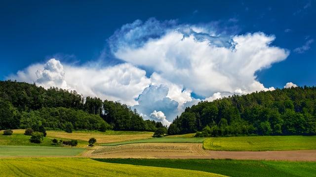 Ein Gewitter türmt sich hinter dem Wald auf. Noch sind grosse Teile des Himmels aber blau.