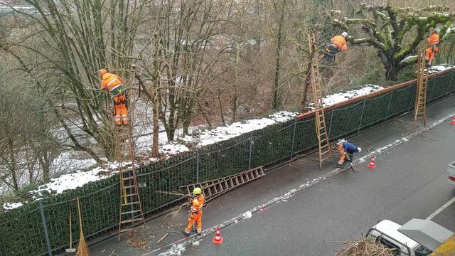 Mitarbeitende der Stadt Bern schneiden Bäume.
