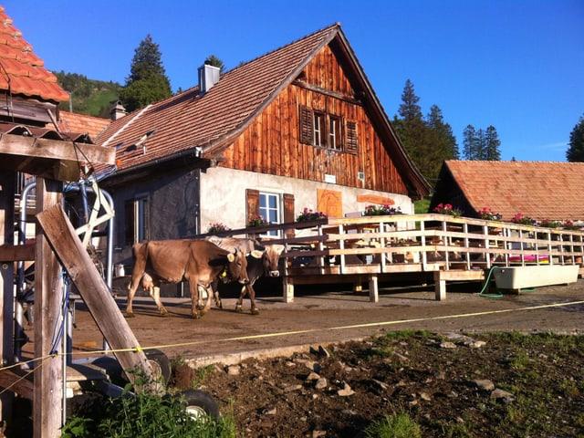 Der Hauptbetrieb besteht aus dem Wohnhaus mit der Käserei...